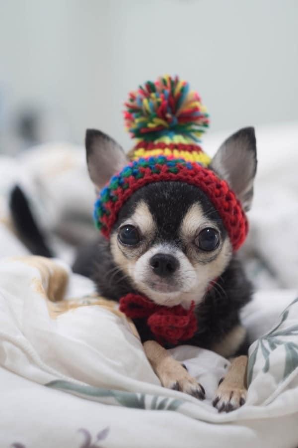 dog breed quiz questions