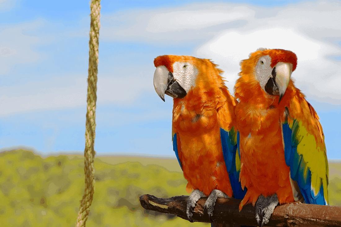bird quiz questions