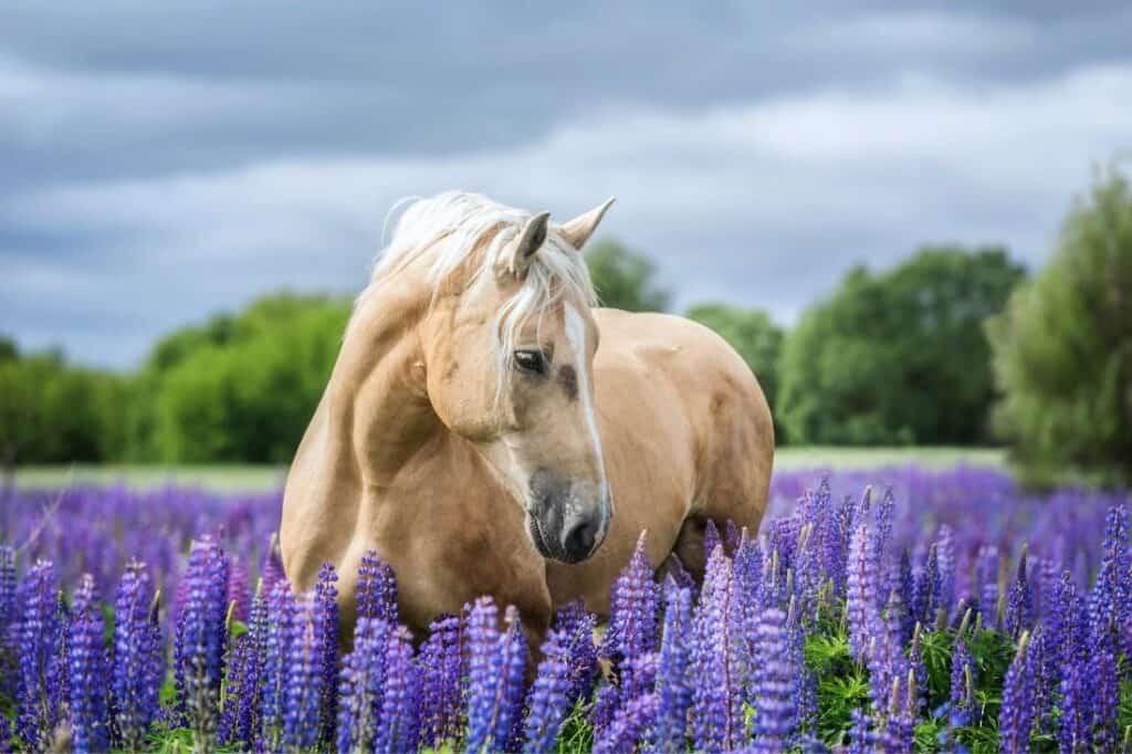 horse quiz questions