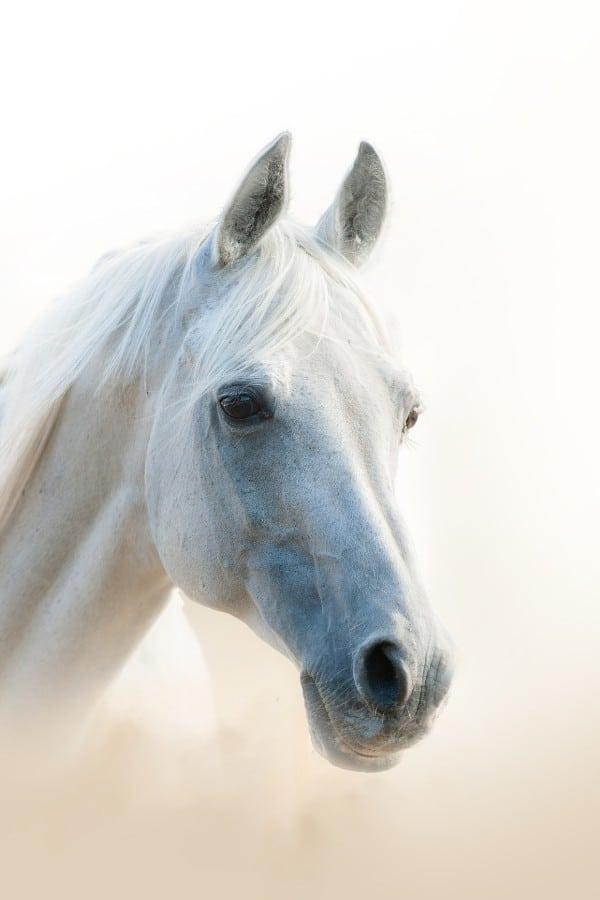 horse trivia questions