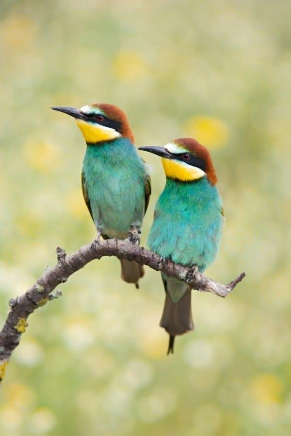 quiz on birds